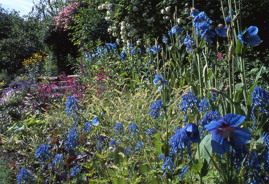 Jardin de berchigranges juin agenda des floraisons for Le jardin en juin