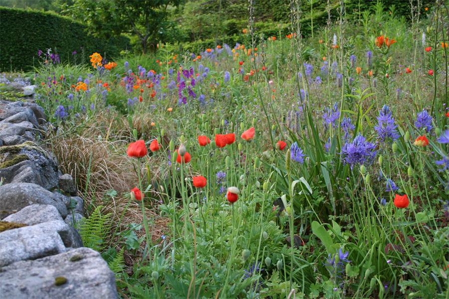 jardin de berchigranges mai agenda des floraisons. Black Bedroom Furniture Sets. Home Design Ideas